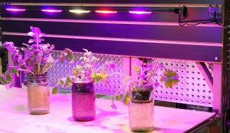 LED Grow Lights- Light Up Your Indoors with Brightness